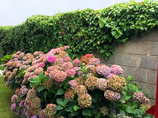 flower-maintenance-tramore
