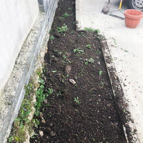 garden-maintenance-before