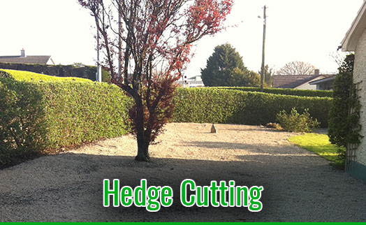 gardenmaintenancetramore_HedgeCutting_2