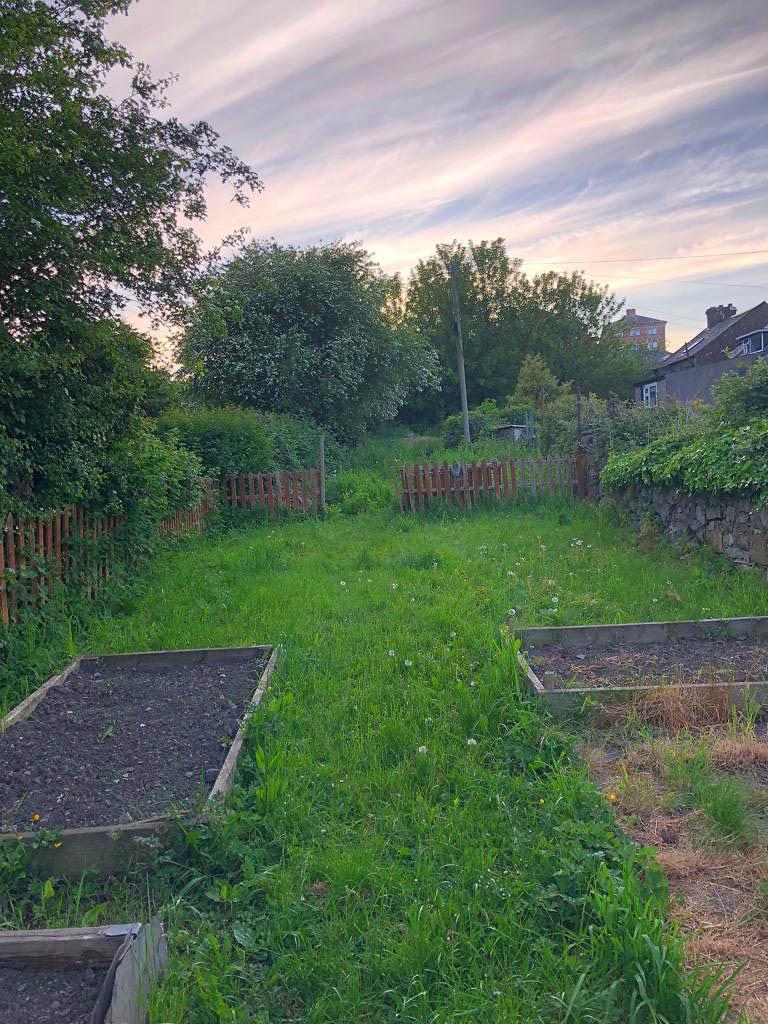 garden-clearance-service