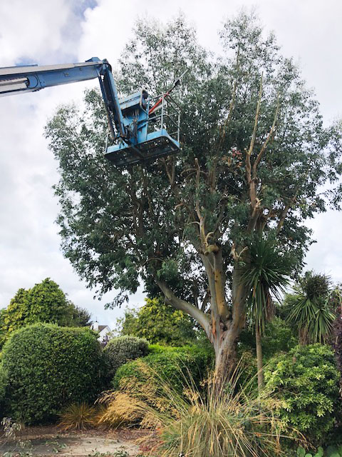 tramore-tree-surgery