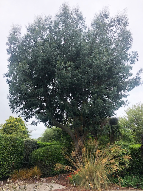 tree-surgeon-waterford