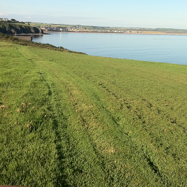 grass-cutting-services-tramore