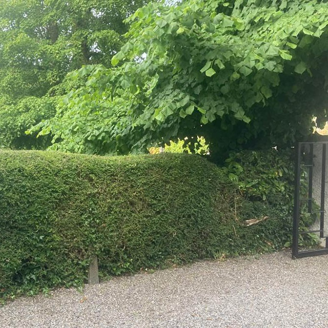 hedge cutting waterford