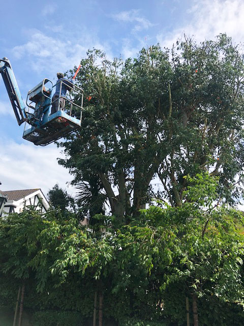 tramore-tree-surgery